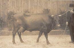 75 - CPA Photo PARIS Concours Agricole (vache) Photo C Robert - Ausstellungen