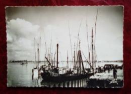 Carte Postale Ancienne - Port-Louis - Les  Thoniers - Port Louis