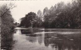 18. SAINT AMAND MONTROND. RARETE. PAYSAGE SUR LE CHER. ANNEE 1951 + TEXTE - Saint-Amand-Montrond