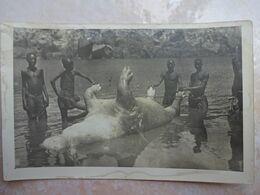 Photo AFRIQUE HAUTE GAMBIE CHASSE à L'hippopotame - Gambia