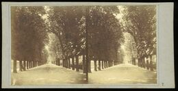 Stereoview - Avenue Des Jardin Des Plantes, PARIS France - Stereoskope - Stereobetrachter