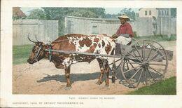 002609 - PHILIPPINES - MAMMY GOING TO MARKET - 1904 - Philippines