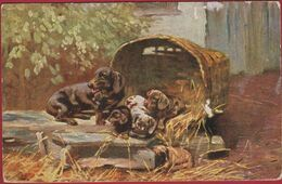 Illustrator Illustrateur Inconnu Puppies Chiens Dogs Chien Dog Hond Hund ABD Serie 737 Old Postcard CPA - Dogs