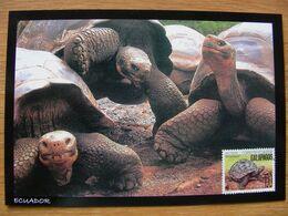Ecuador Carte Maximum Galapagos Tortue Tortuga - Tortues