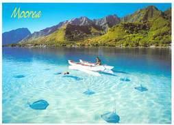 Polynésie Française MOOREA Vol De Raies Armées Dans Le Lagon- Tahitienne En Pirogue à Balancier T.SYLVAIN 1255 Tahiti @ - Polynésie Française