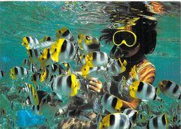 Polynésie Française BORA BORA Merveilles Du Monde Sous-marin ( Plongée)   (Erwin Christian 463) @Tahiti*PRIX FIXE - Polynésie Française