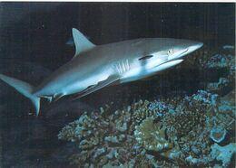 Polynésie Française Requin Gris De Récif Grey Reef (Erwin Christian  5048 ) @Tahiti*PRIX FIXE - Polynésie Française