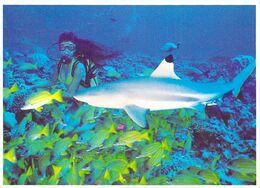 Polynésie Française Requin Du Récif Ailerons Noirs-Mauri Reef Shark (plongée (Photo Daniel Pardon 737Tahiti @*PRIX  FIXE - Polynésie Française