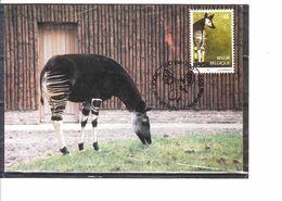 2486 Zoo D' Anvers - Okapi - Maximum Cards