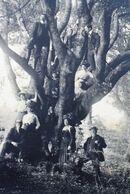 Avant 1900 CALAIS PHOTO Originale MONTAGE ARBRE GÉNÉALOGIQUE+ANCIENS EN BAS,JEUNES SUR BRANCHES ARBRE Photo Photographie - Ancianas (antes De 1900)