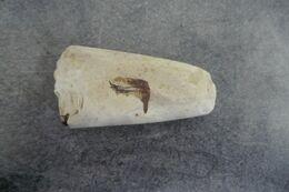 HACHE SILEX TAILLE NÉOLITHIQUE/ NORMANDIE HACHE POLIE PRÉHISTOIRE - - Fossils