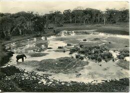 Nyeri, View From Ttreetops Hotel, Elephant - Lot. 3416 - Kenia