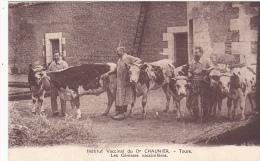 Cpa-37-tours-animée- Institut Vaccinal Du Dr Chaunier-vaches - Tours