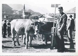 Schuls/Scuol - Viehmarkt          Ca. 1950 - GR Grisons