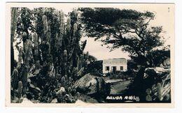 ARUBA-22  ARUBA : - Aruba