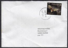 Croatia Draganic 2020 / Croatian Fauna - Bat / Plecotus Kolombatovici - Kroatien