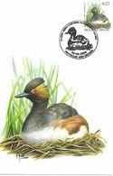 BUZIN Oiseau Grebe à Cou Noir Cachet BRUXELLES 06/06/2006 Timbre Yvert 3524 Carte Signée Buzin - Maximum Cards