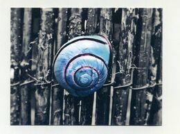 CP Pub US Neuve. Snailmailcool. Website Et Réseaux Sociaux. Philatélie, Penpalling, Postcross... Escargot Caracol Snail - Advertising