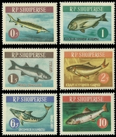 Albanien 1964 - Mi-Nr. 809-814 ** - MNH - Fische / Fish - Albanien