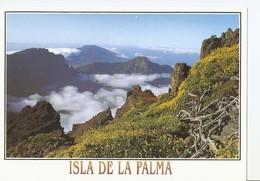 Postal 041480 : Isla De La Palma - Caldera De Taburiente. Vista Desde Los Andenes - Non Classificati