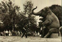 Dresden  Zoologischer Garten    Elefanten - Dresden