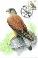 BUZIN Oiseau Faucon Crecerelle Cachet BRUXELLES Premier Jour 29/01/2007 Timbre Yvert 3600 Carte Signée Buzin - Maximum Cards