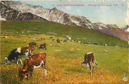 74 - Saint Gervais Les Bains - Paturage Du Plateau Du Truc - Animée - Colorisée - Vaches - Correspondance - CPA - Voir S - Saint-Gervais-les-Bains