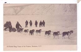 DAWSON YT  A Picked Dog Team Of The Yukon Sled Dogs - Yukon