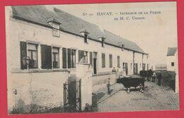 Havay - Intérieur De La Ferme De M.C. Urbain .... Bovins - 1911 ( Voir Verso ) - Quévy