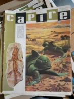 OLD ITALIAN MAGAZINE CAPIRE - 1966 COVER WITH PREHISTORIC ANIMALS DINOS SKELETON FOSSIL - Books, Magazines, Comics