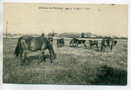47 AGEN BOE Chevaux Au Pré Chateau De Pelissier écrite Timbrée  1910   D11 2017 - Agen