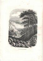 Gravure: Les Pins De Sierre Siders - Valais Suisse - Lithographies