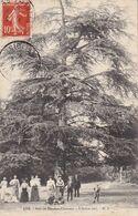 CPA CHAVILLE 92 - L'arbre Vert - Bois De Meudon Clamart - Chaville
