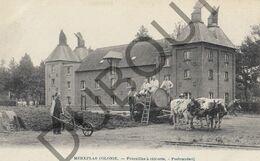 Postkaart-Carte Postale - MERKSPLAS Colonie - Fourailles à Chicorée - Peebranderij (B663) - Merksplas