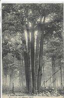91, SENART, Forêt De Sénart, Carrefour De L'Hotel-Dieu, Les Cinq Chênes, Scan Recto-Verso - Sénart