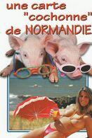 Femme Aux Seins Nus  En Normandie - Pin-Ups
