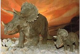 Thème - Animaux - Triceratops - Altri