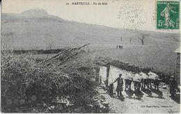 MARVEJOLS /  PIC DU MIDI  ET Elevage- Paire De Boeufs (1912) - Marvejols