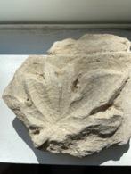 Fragment De Bas Relief Romain Feuille D 'acanthe - Archeologie