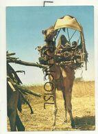 Soudan. Nomad Family Travelling W - Sudan. Famille Nomade. Dromadaire - Soudan