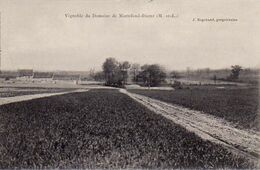 S36-008 Vignoble Du Domaine De Mortefond-Distré - Other Municipalities