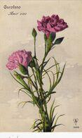 Cartolina - Garofano. - Flores, Plantas & Arboles