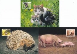 Suisse - Maximumkarten - Landwirtschaft, Nutztiere - Agriculture, Farm Animals -Agriculture, Animaux De La Ferme - Landbouw