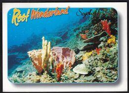 Seychelles 2010 / Reef Wonderland / Colourful Sponges Growing On A Coral Reef - Seychelles