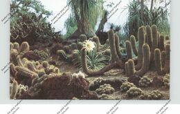 FLORA - SUKKULENTEN / Kakteen, Botanical Gardens, San Marino California - Sukkulenten