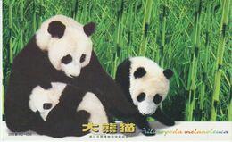 Chine. China . Carte Postale Pré-timbréee. Ours Panda Bear - Orsi