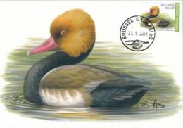 MC1506 - Netta Rufina - 1985-.. Pájaros (Buzin)