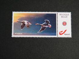 Buzin Mystamp Grauwe Ganzen - 1985-.. Pájaros (Buzin)