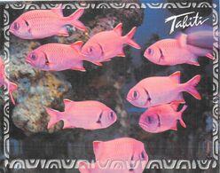 Polynésie Française Faune  Fauna  Poisson Poissons - Vue POLYNESIE  (1) Photo Joël Fournier Tahiti TH 330 @ *PRIX FIXE - Polynésie Française