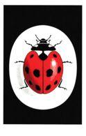 Postcard - Ladybird Book Cover For - Vintage Ladybird Logo -  New - Books